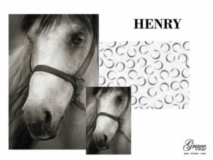 henry is a beautiful greyscale white horse in bridle. the pattern pack features grey watercolor horseshoes on a white background